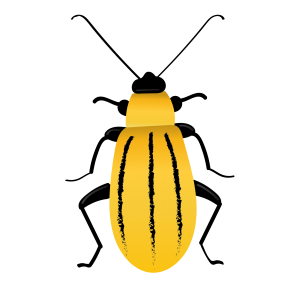 western corn rootworm-01